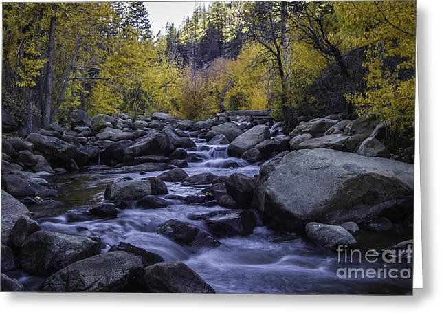 Down River Greeting Card by Mitch Shindelbower
