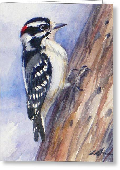 Downey Woodpecker Greeting Card