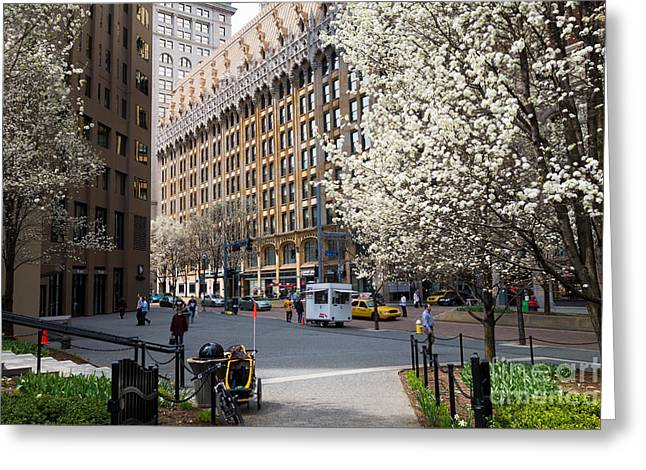 Downtown Pittsburgh In The Spring Greeting Card by Amy Cicconi