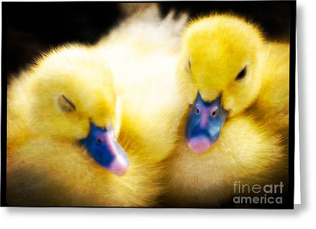 Downy Ducklings Greeting Card by Edward Fielding