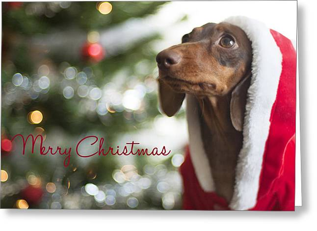Doxie Clause Greeting Card by Rischa Heape