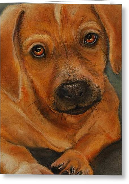 Doxie Greeting Card by Jean Cormier