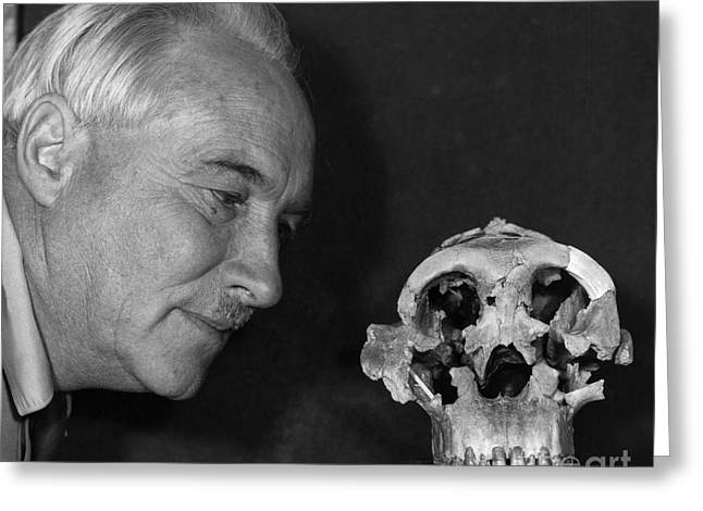 Dr. Louis Leaky With Zinjanthropus Skull Greeting Card