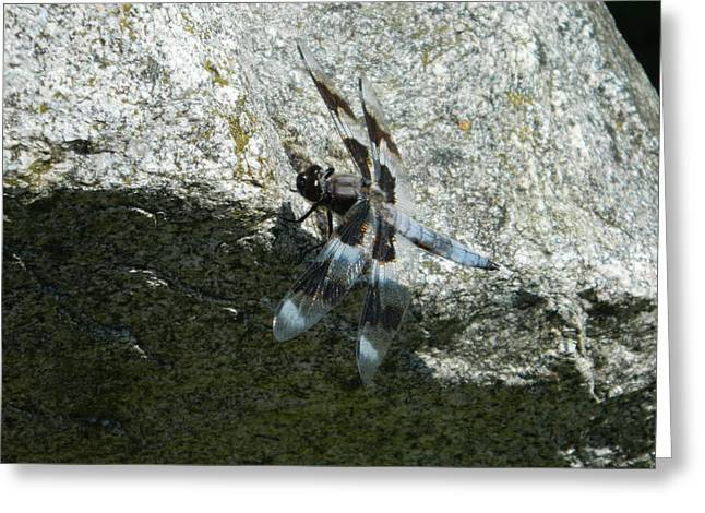 Dragon Fly On The Rock Greeting Card by Nicki Bennett