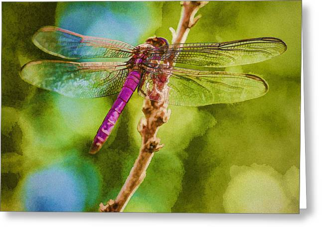 Dragon Fly Or Not Painterly Greeting Card by Scott Campbell