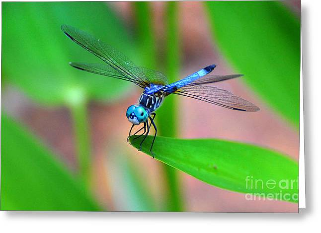 Dragon Fly Greeting Card by Stuart Mcdaniel