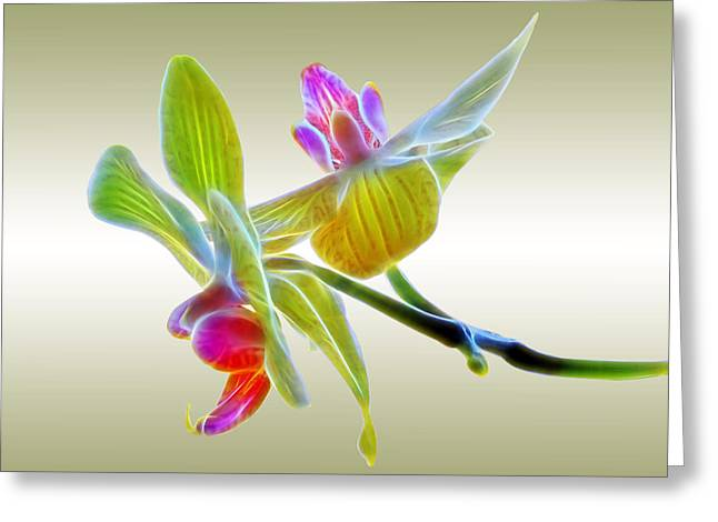 Dragon Glow Orchid Greeting Card by Gill Billington