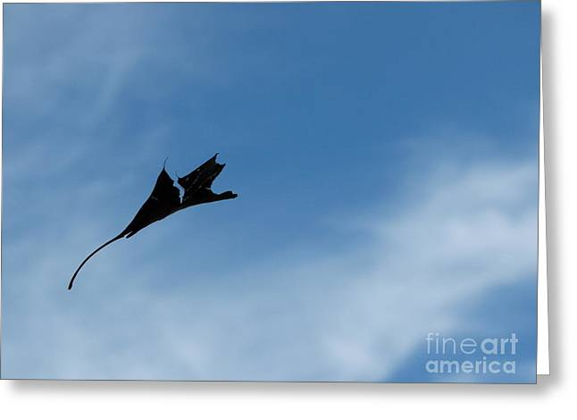 Greeting Card featuring the photograph Dragon In Flight by Jane Ford