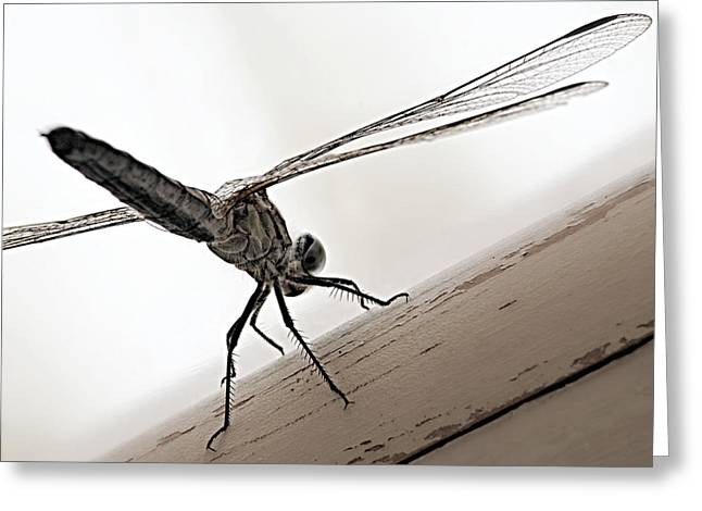 Dragon Of The Air  Greeting Card