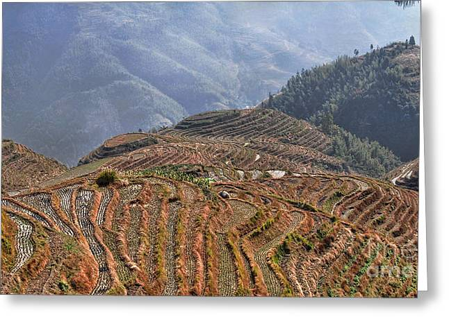 Dragon S Backbone Rice Terraces Greeting Card