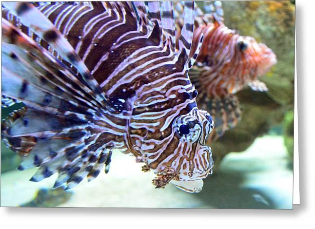 Dragonfish In Tandem Greeting Card by Sandi OReilly