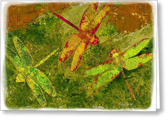 Dragonflies Abound Greeting Card by Jack Zulli