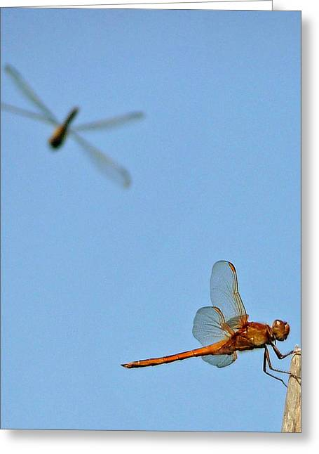 Greeting Card featuring the photograph Dragonflies by Jim Whalen