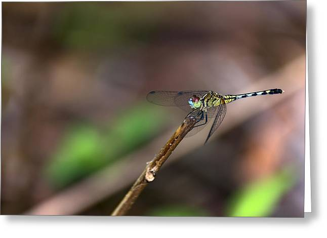 Dragonfly 01 Greeting Card by Arron Patton