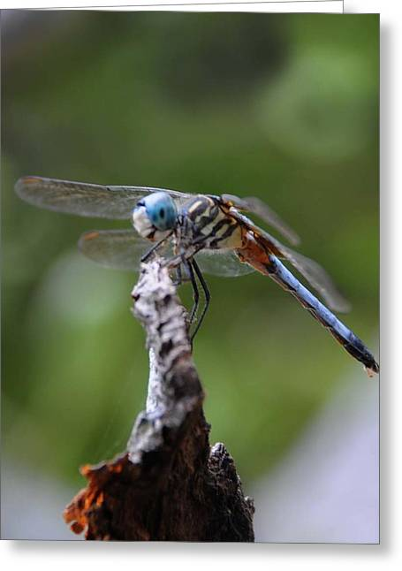 Dragonfly 02 Greeting Card by Leon Hollins III