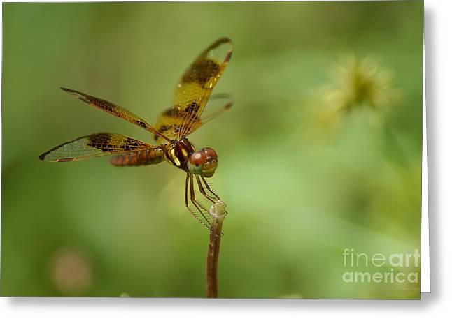 Greeting Card featuring the photograph Dragonfly 2 by Olga Hamilton