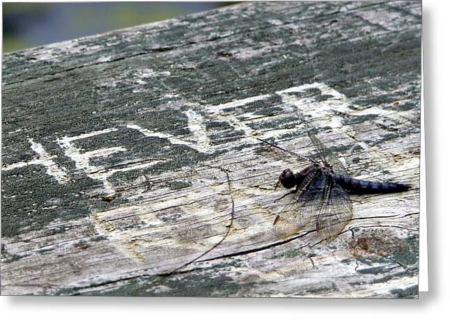 Greeting Card featuring the photograph Dragonfly 4ever by Jim Whalen
