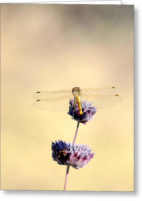 Greeting Card featuring the photograph Dragonfly by AJ  Schibig