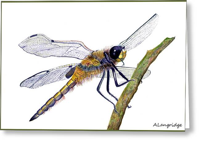 Hairy Dragonfly Of England Greeting Card by Alison Langridge