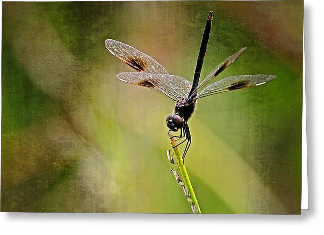 Greeting Card featuring the photograph Dragonfly And Friends by Dawn Currie