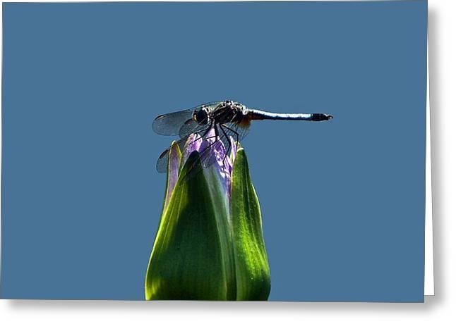 Dragonfly Appreciates A Flower Greeting Card by Byron Varvarigos