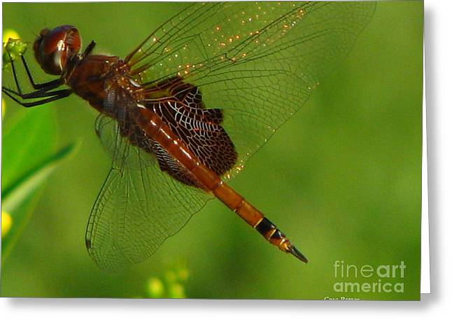 Dragonfly Art 2 Greeting Card by Greg Patzer