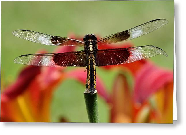Dragonfly Beauty Greeting Card by Rebecca Overton