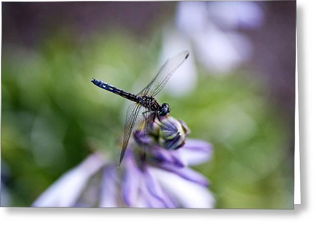 Dragonfly Greeting Card by Christopher McPhail
