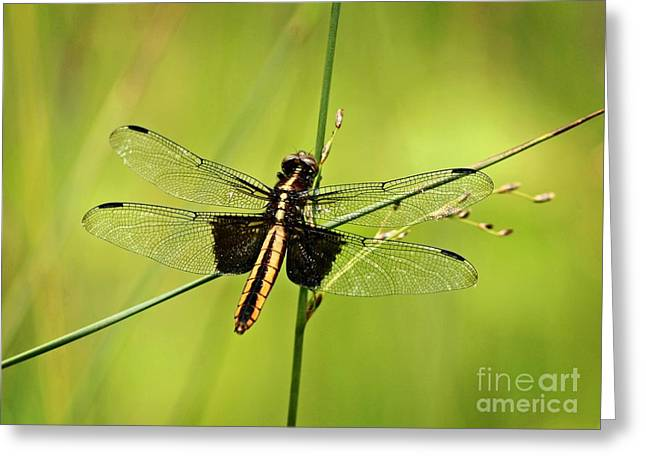 Dragonfly Cross Roads Greeting Card