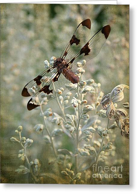 Dragonfly Greeting Card by Darren Fisher