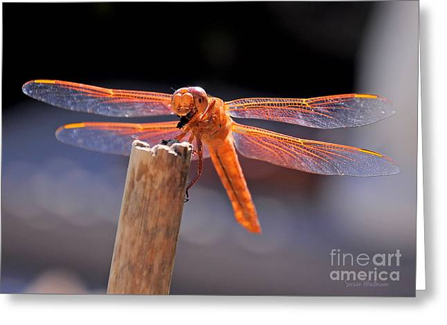 Dragonfly Eating An Insect Greeting Card