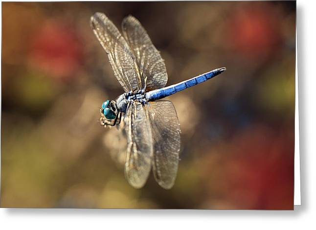 Dragonfly Floating Greeting Card