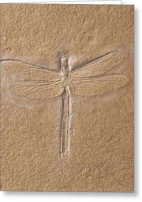 Dragonfly Fossilised In Limestone Greeting Card
