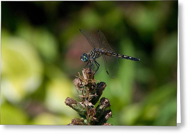 Greeting Card featuring the photograph Dragonfly by Greg Graham