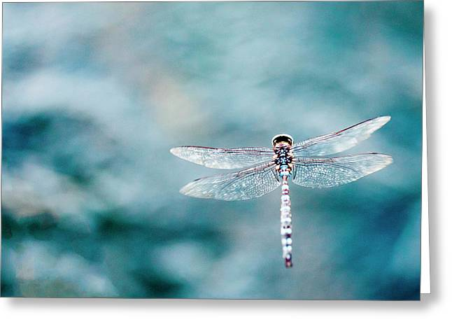 Dragonfly Hovering Over Blue Water Greeting Card