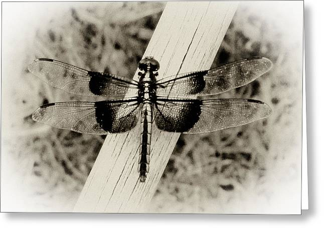 Dragonfly In Sepia Greeting Card