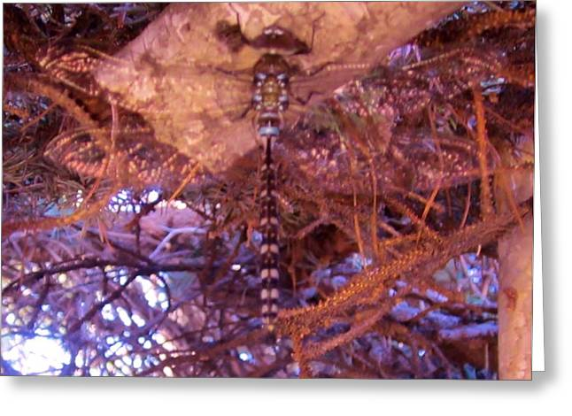 Dragonfly In Spruce Greeting Card