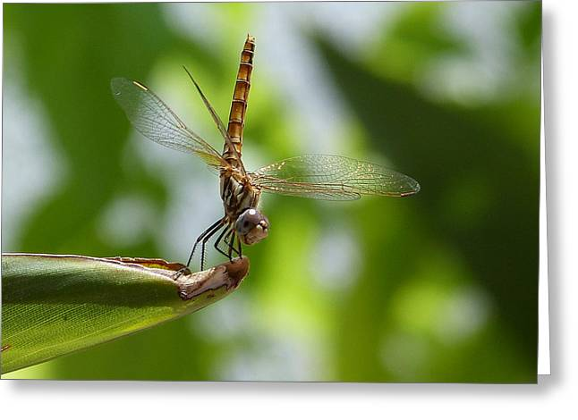 Dragonfly Greeting Card by Janina  Suuronen