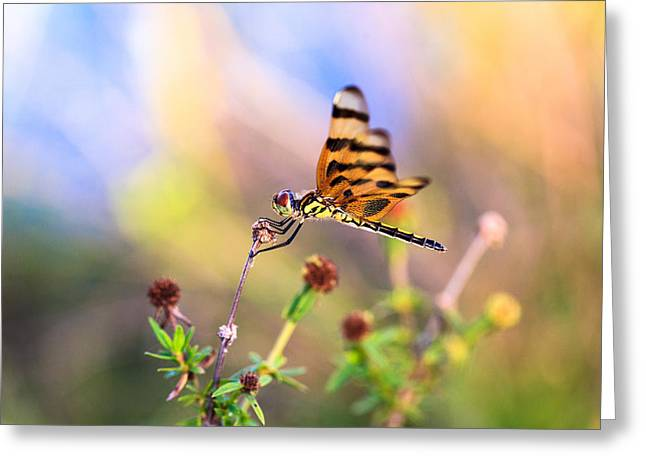 Dragonfly Greeting Card by Jonathan Gewirtz