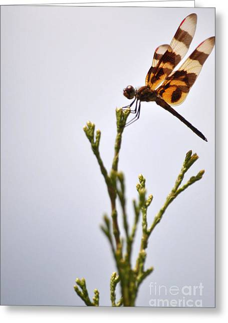 Dragonfly Lands Greeting Card by Affini Woodley