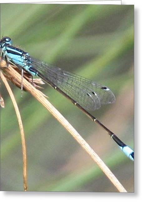 Dragonfly Greeting Card by Liz Bills
