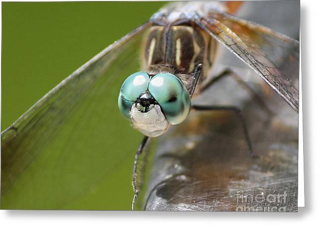 Dragonfly Macro Greeting Card