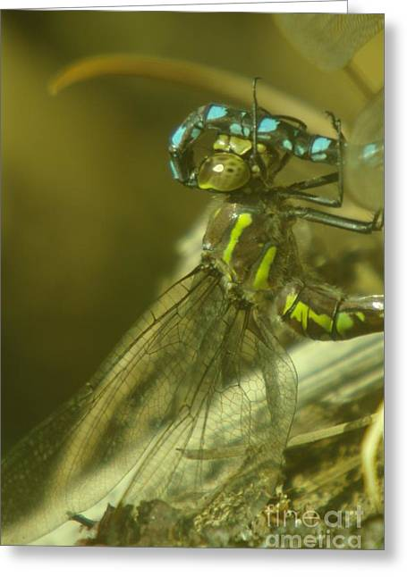 Dragonfly Macro  Greeting Card by Jeff Swan