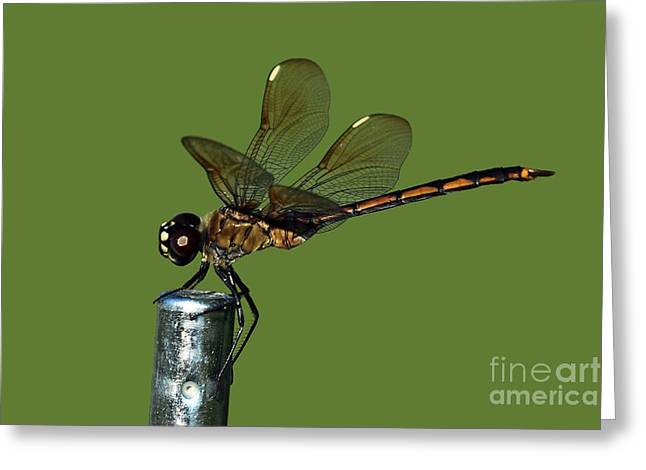 Greeting Card featuring the photograph Dragonfly by Meg Rousher