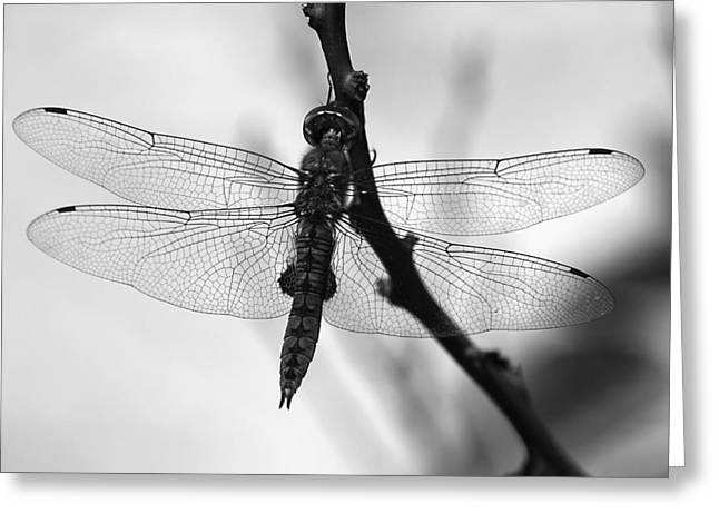 Dragonfly Mosaic Greeting Card