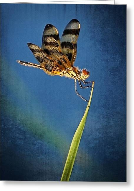Dragonfly On Blue Greeting Card by Dawn Currie