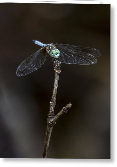 Greeting Card featuring the photograph Dragonfly On Branch by Paula Porterfield-Izzo