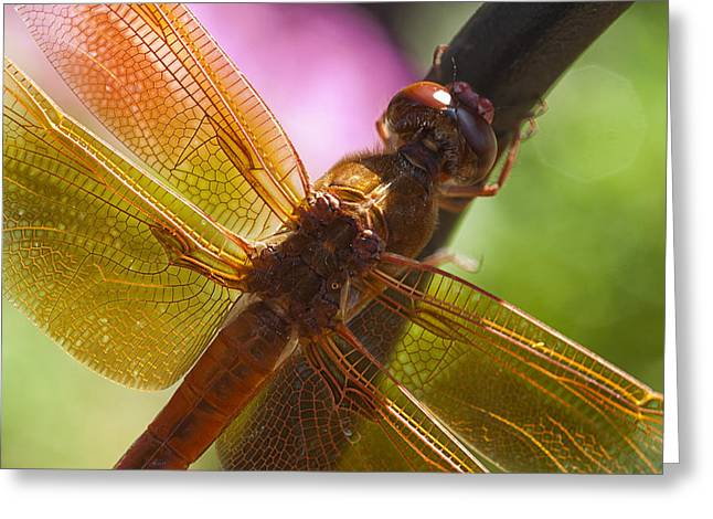 Dragonfly Patterns Greeting Card