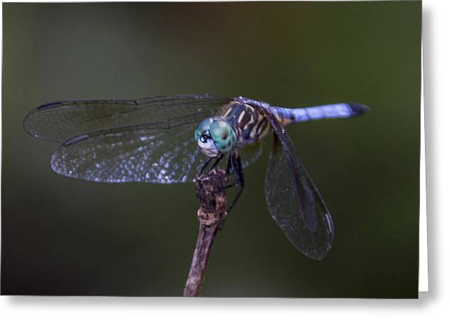 Greeting Card featuring the photograph Dragonfly by Paula Porterfield-Izzo