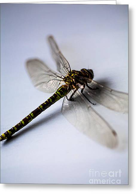 Dragonfly Portrait Greeting Card by Jan Bickerton